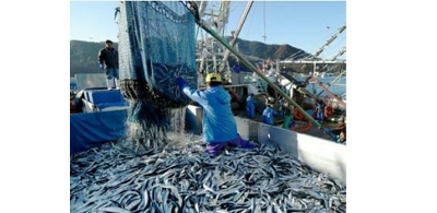 Government modifies fishing regulations due to crisis and overfishing