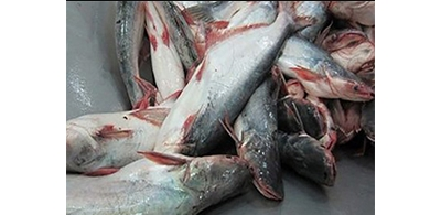 Vietnam asks Cambodia to reverse catfish import ban