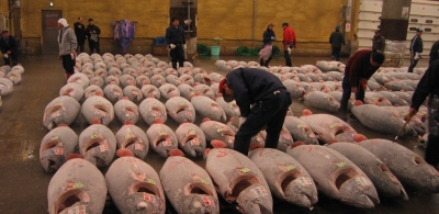 Official data on bluefin tuna imports