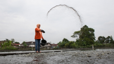 Meeting standards-winning markets: UNIDO enables first ever export of Indonesian pangasius