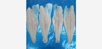 Pangasius export is still influential by Covid-19